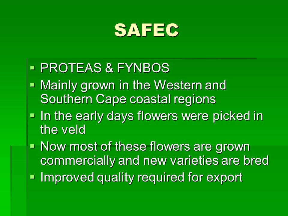 SAFEC PROTEAS & FYNBOS PROTEAS & FYNBOS Mainly grown in the Western and Southern Cape coastal regions Mainly grown in the Western and Southern Cape coastal regions In the early days flowers were picked in the veld In the early days flowers were picked in the veld Now most of these flowers are grown commercially and new varieties are bred Now most of these flowers are grown commercially and new varieties are bred Improved quality required for export Improved quality required for export