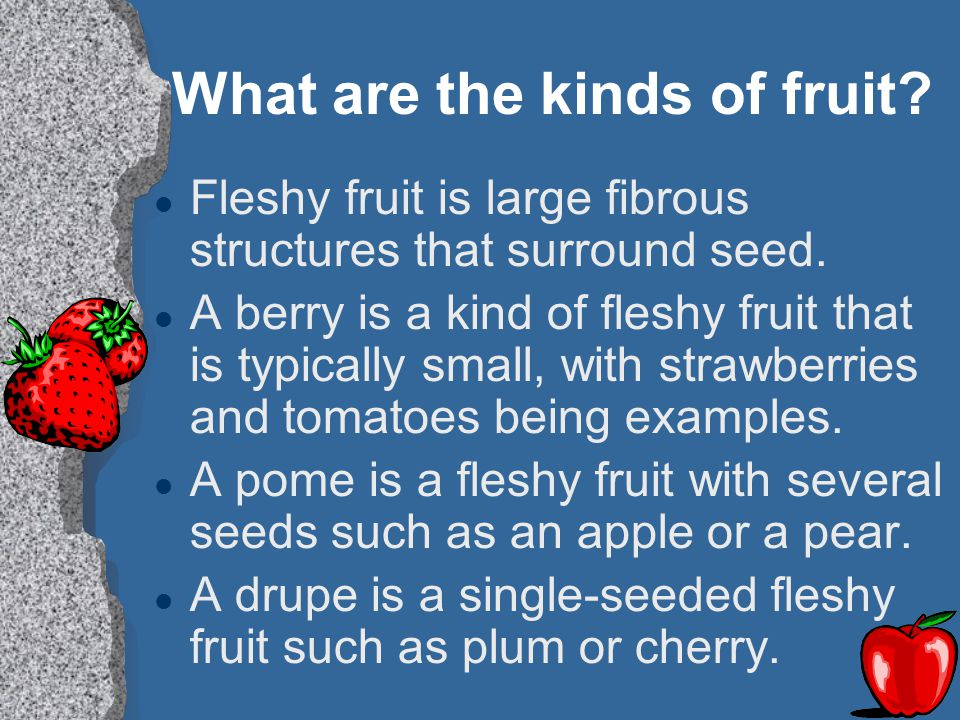 What are the kinds of fruit? l Fleshy fruit is large fibrous structures that surround seed. l A berry is a kind of fleshy fruit that is typically smal