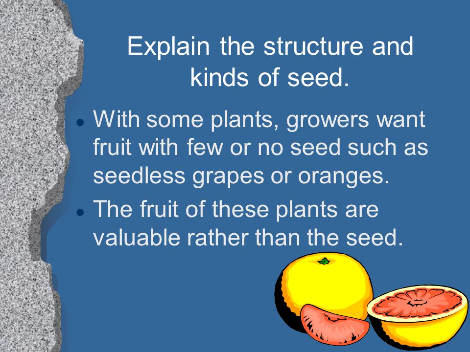 Explain the structure and kinds of seed. l With some plants, growers want fruit with few or no seed such as seedless grapes or oranges. l The fruit of