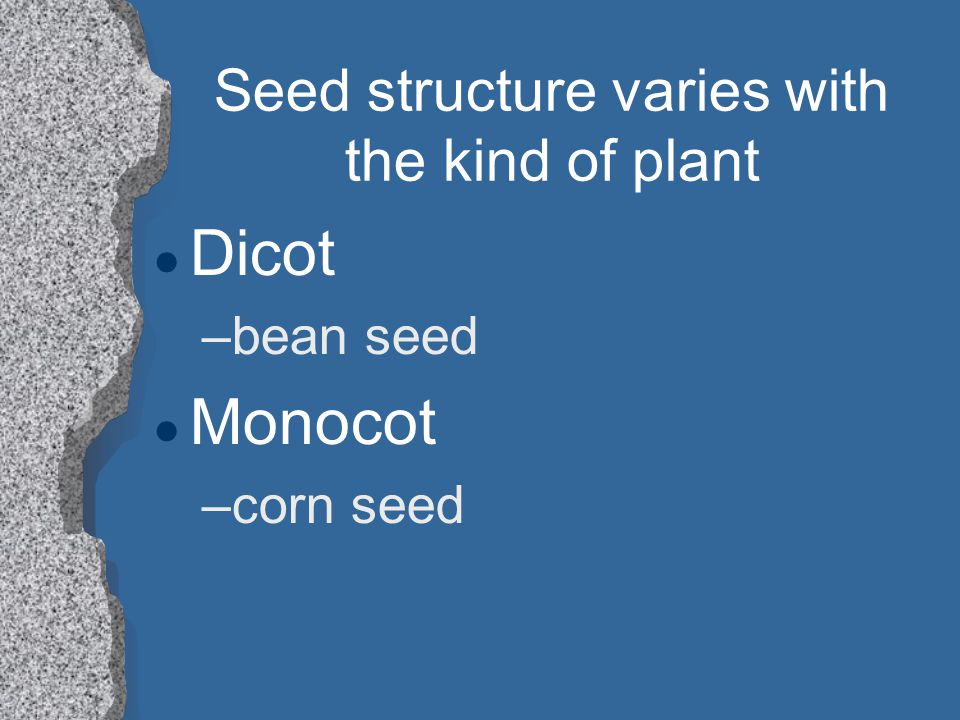 Seed structure varies with the kind of plant l Dicot –bean seed l Monocot –corn seed