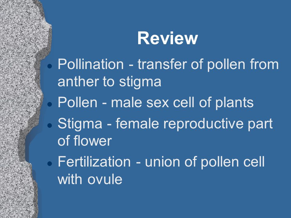 Review l Pollination - transfer of pollen from anther to stigma l Pollen - male sex cell of plants l Stigma - female reproductive part of flower l Fer