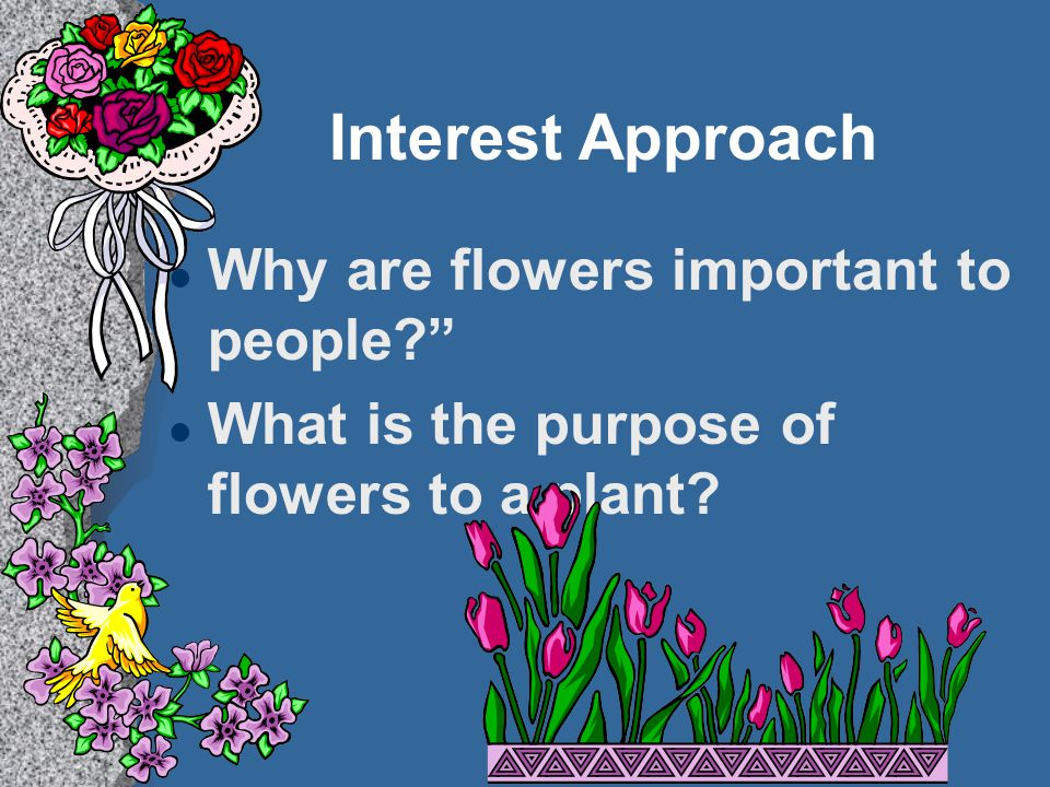 Interest Approach Why are flowers important to people? What is the purpose of flowers to a plant?