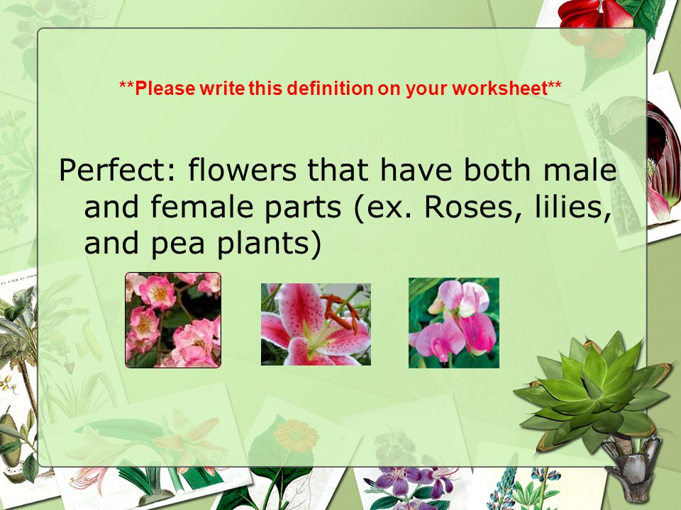 **Please write this definition on your worksheet** Perfect: flowers that have both male and female parts (ex. Roses, lilies, and pea plants)