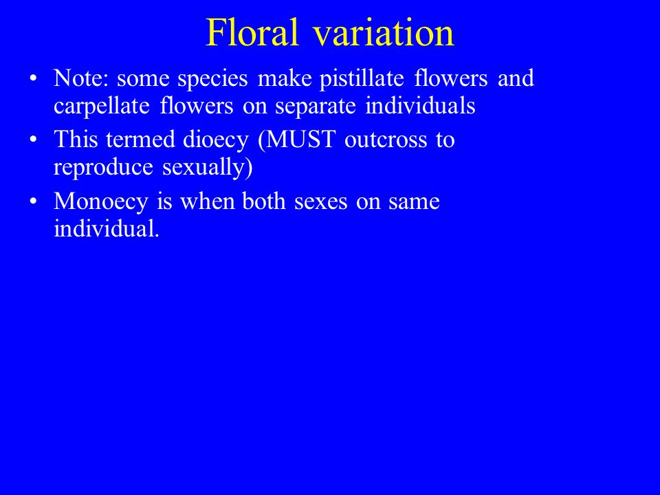 Floral variation Note: some species make pistillate flowers and carpellate flowers on separate individuals This termed dioecy (MUST outcross to reprod