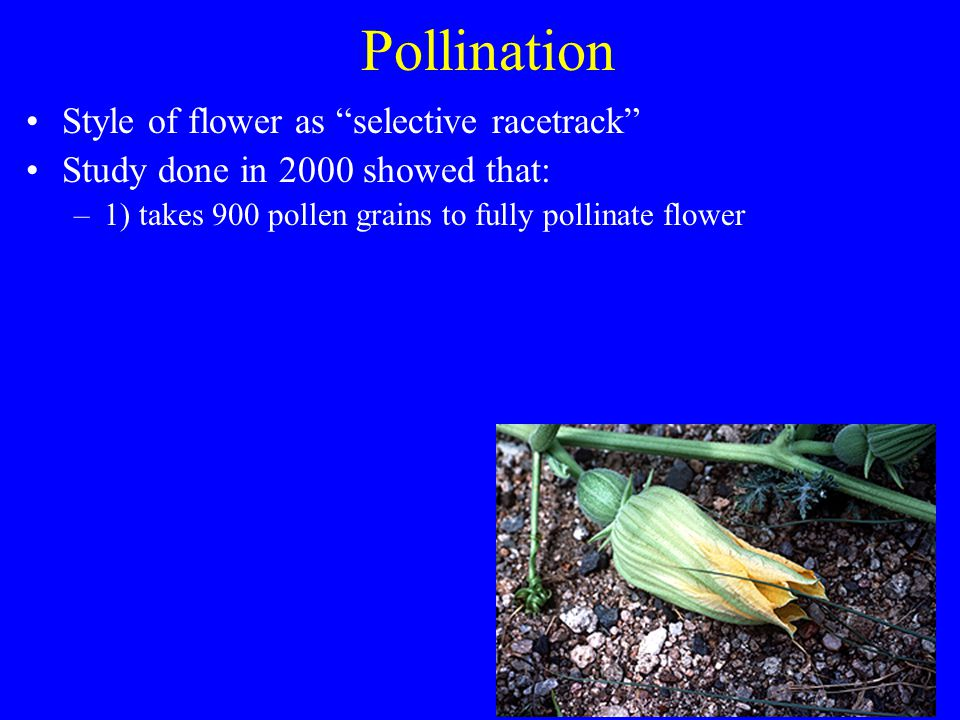 Pollination Style of flower as selective racetrack Study done in 2000 showed that: –1) takes 900 pollen grains to fully pollinate flower