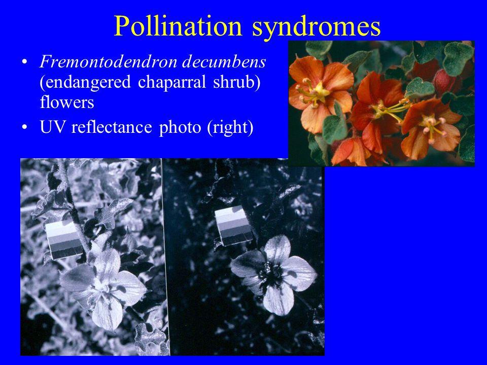 Pollination syndromes Fremontodendron decumbens (endangered chaparral shrub) flowers UV reflectance photo (right)