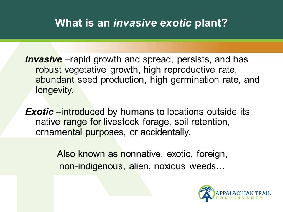 What is an invasive exotic plant.