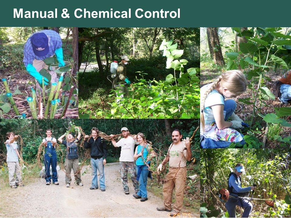 Manual & Chemical Control