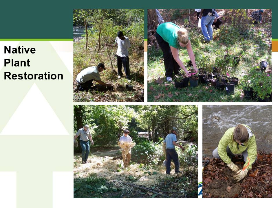 Native Plant Restoration