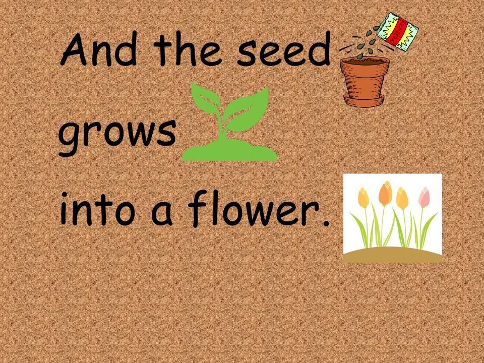 And the seed grows into a flower.