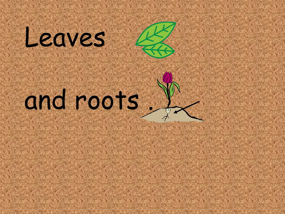 Leaves and roots.