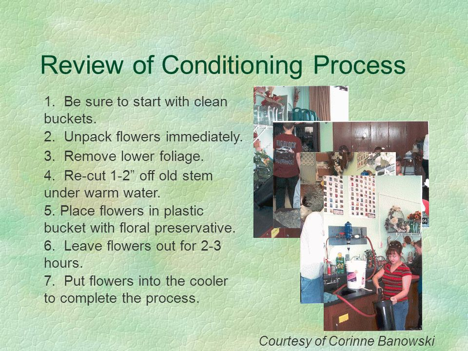 Review of Conditioning Process 1. Be sure to start with clean buckets. 2. Unpack flowers immediately. 3. Remove lower foliage. 4. Re-cut 1-2 off old s