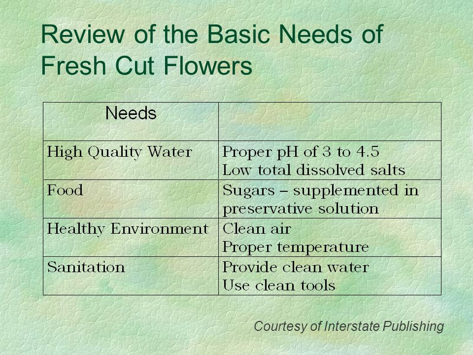 Review of the Basic Needs of Fresh Cut Flowers Courtesy of Interstate Publishing