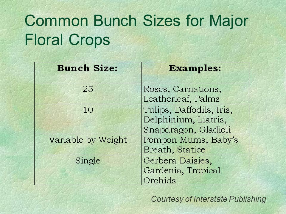 Common Bunch Sizes for Major Floral Crops Courtesy of Interstate Publishing