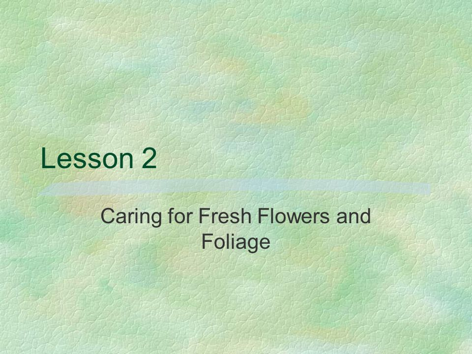Lesson 2 Caring for Fresh Flowers and Foliage