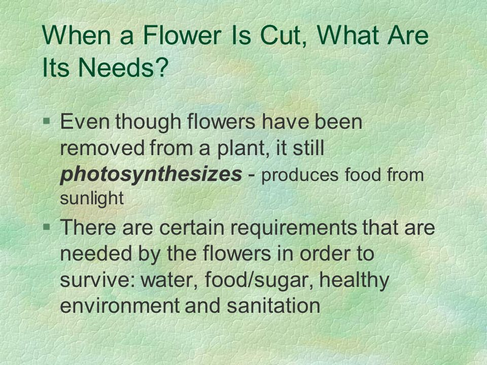 When a Flower Is Cut, What Are Its Needs? §Even though flowers have been removed from a plant, it still photosynthesizes - produces food from sunlight