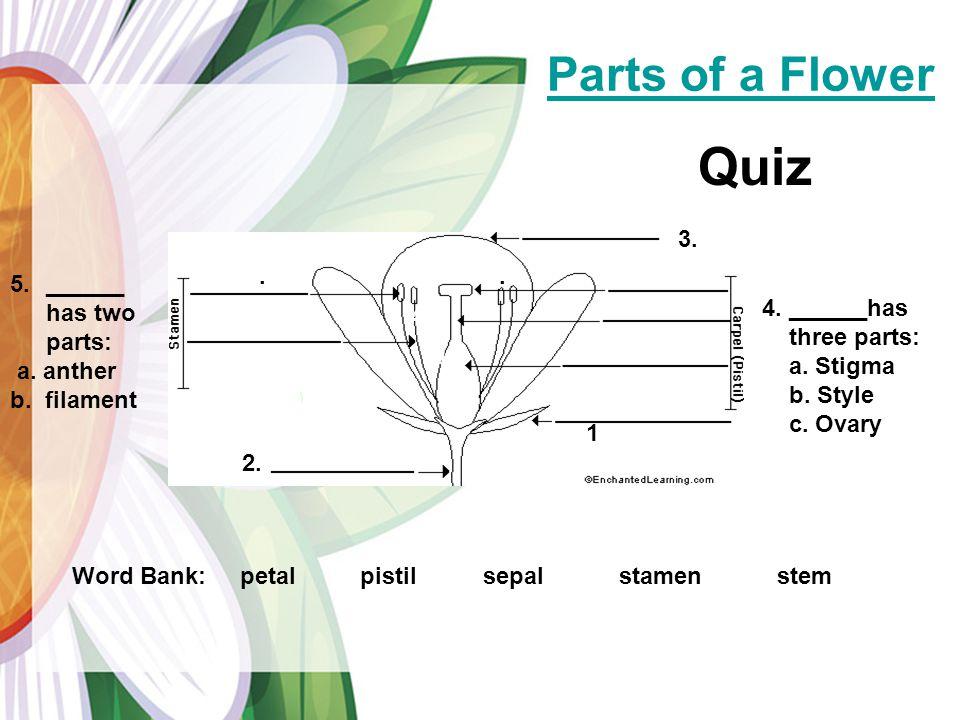 Parts of a Flower Word Bank: petal pistil sepal stamen stem 2.