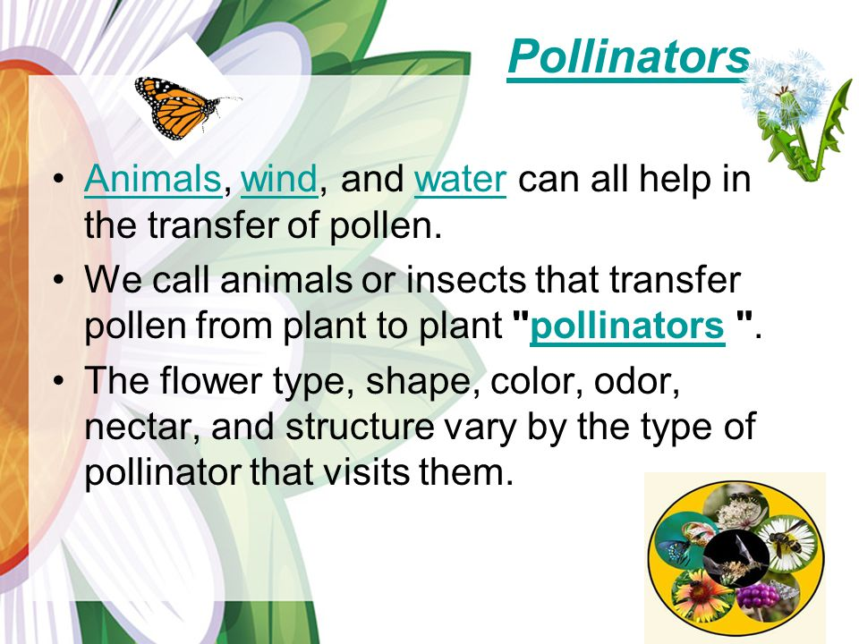 Pollinators Animals, wind, and water can all help in the transfer of pollen.Animalswindwater We call animals or insects that transfer pollen from plant to plant pollinators .pollinators The flower type, shape, color, odor, nectar, and structure vary by the type of pollinator that visits them.