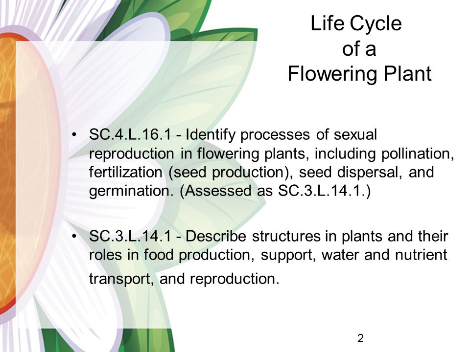 SC.4.L.16.1 - Identify processes of sexual reproduction in flowering plants, including pollination, fertilization (seed production), seed dispersal, and germination.
