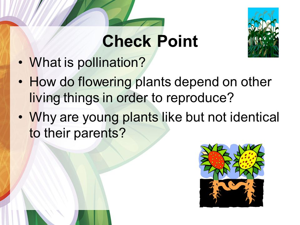 Check Point What is pollination.