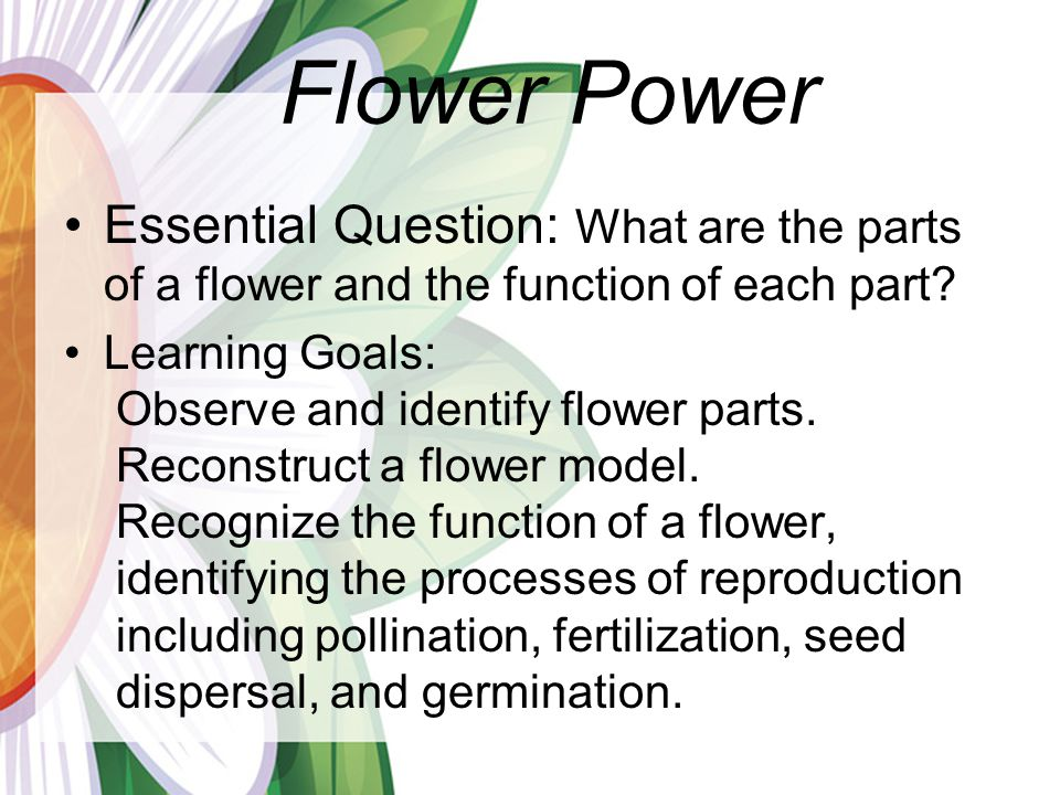 Flower Power Essential Question: What are the parts of a flower and the function of each part.