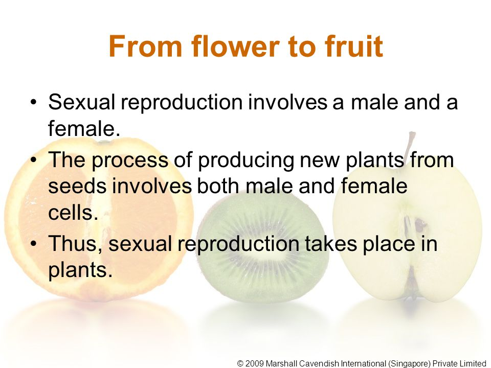 From flower to fruit Sexual reproduction involves a male and a female. The process of producing new plants from seeds involves both male and female ce