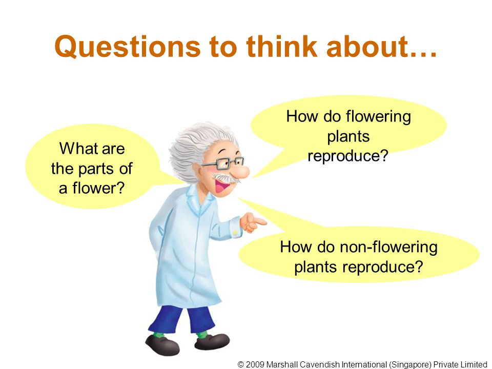 Reproduction in flowering plants Flowering plants can reproduce from seeds.