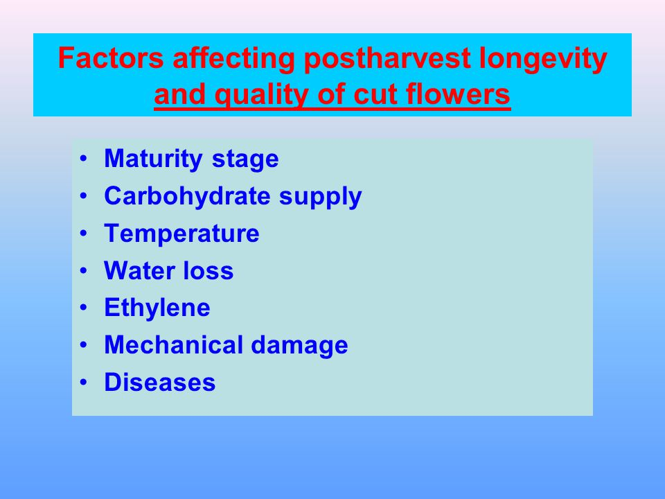 Maturity stage Cut flowers are usually picked when the buds are starting to open.
