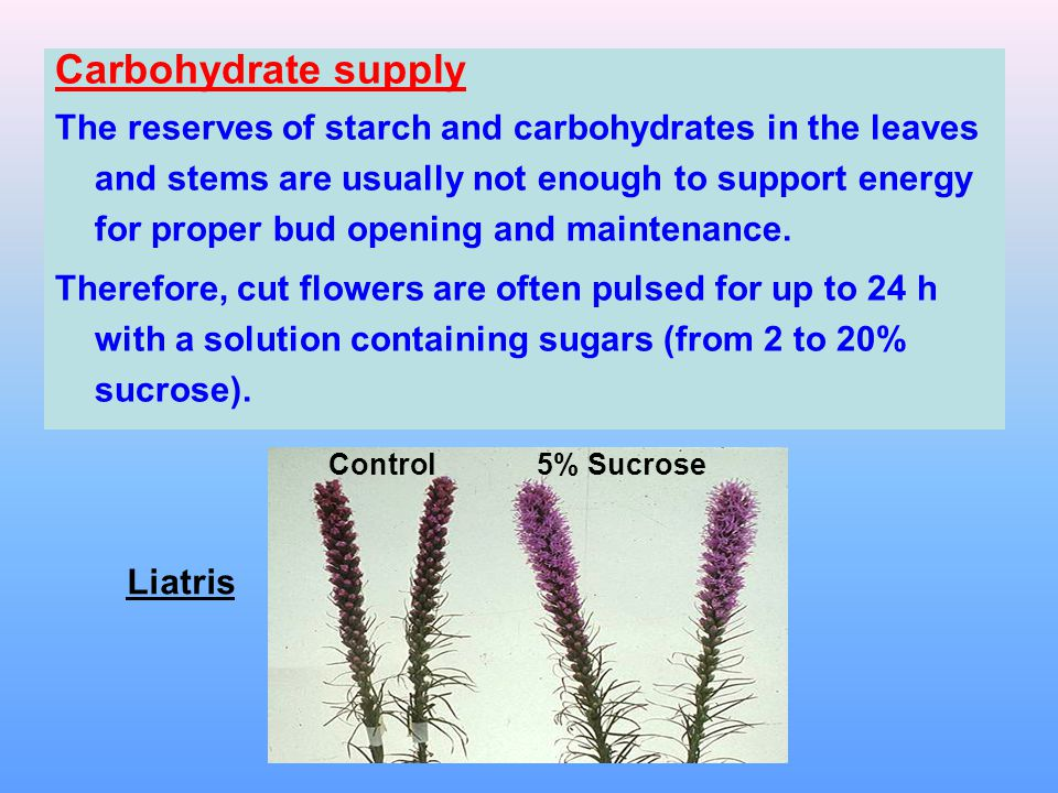 Temperature Flowers have high respiration rates, which increases logarithmically with increasing temperatures.