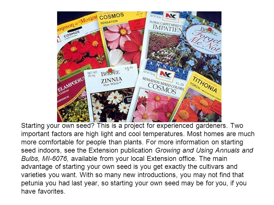 Starting your own seed? This is a project for experienced gardeners. Two important factors are high light and cool temperatures. Most homes are much m
