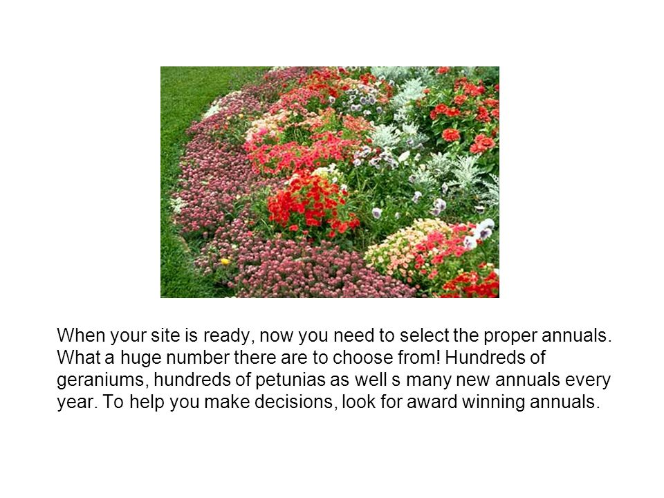 When your site is ready, now you need to select the proper annuals. What a huge number there are to choose from! Hundreds of geraniums, hundreds of pe