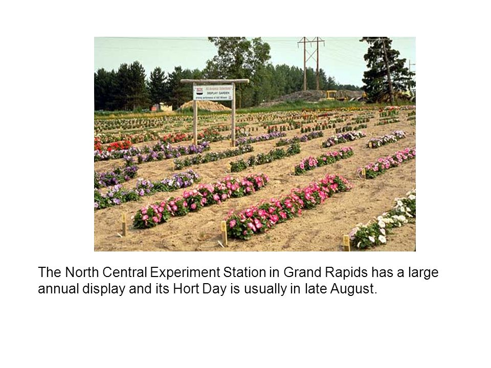 The North Central Experiment Station in Grand Rapids has a large annual display and its Hort Day is usually in late August.