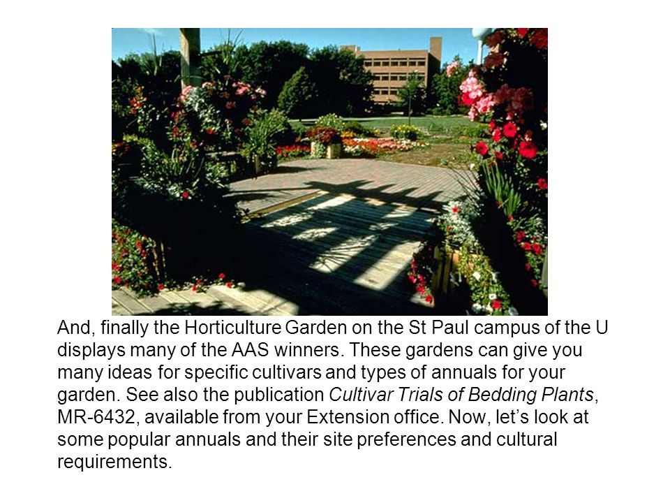 And, finally the Horticulture Garden on the St Paul campus of the U displays many of the AAS winners. These gardens can give you many ideas for specif