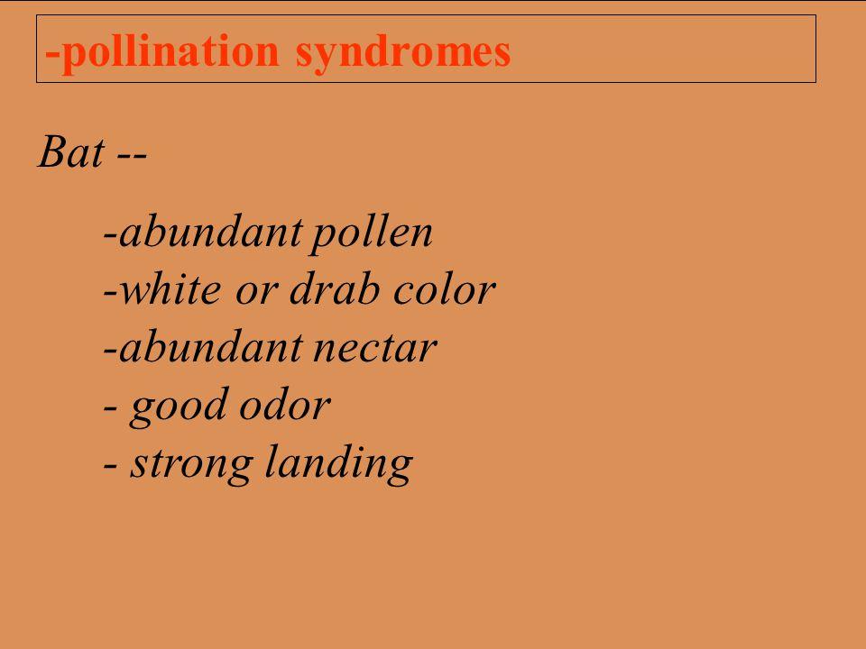 -pollination syndromes Bat -- -abundant pollen -white or drab color -abundant nectar - good odor - strong landing