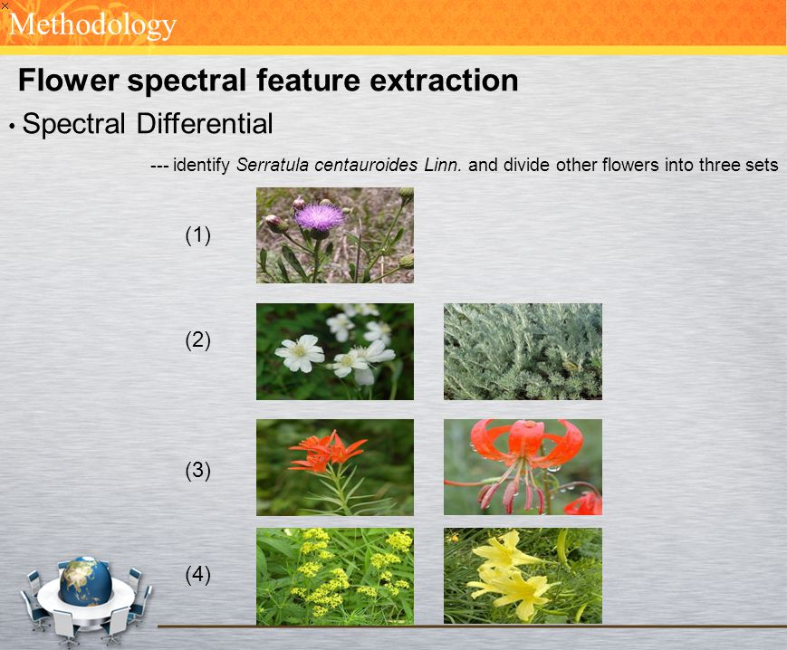 Flower spectral feature extraction Spectral Differential --- identify Serratula centauroides Linn. and divide other flowers into three sets Methodolog
