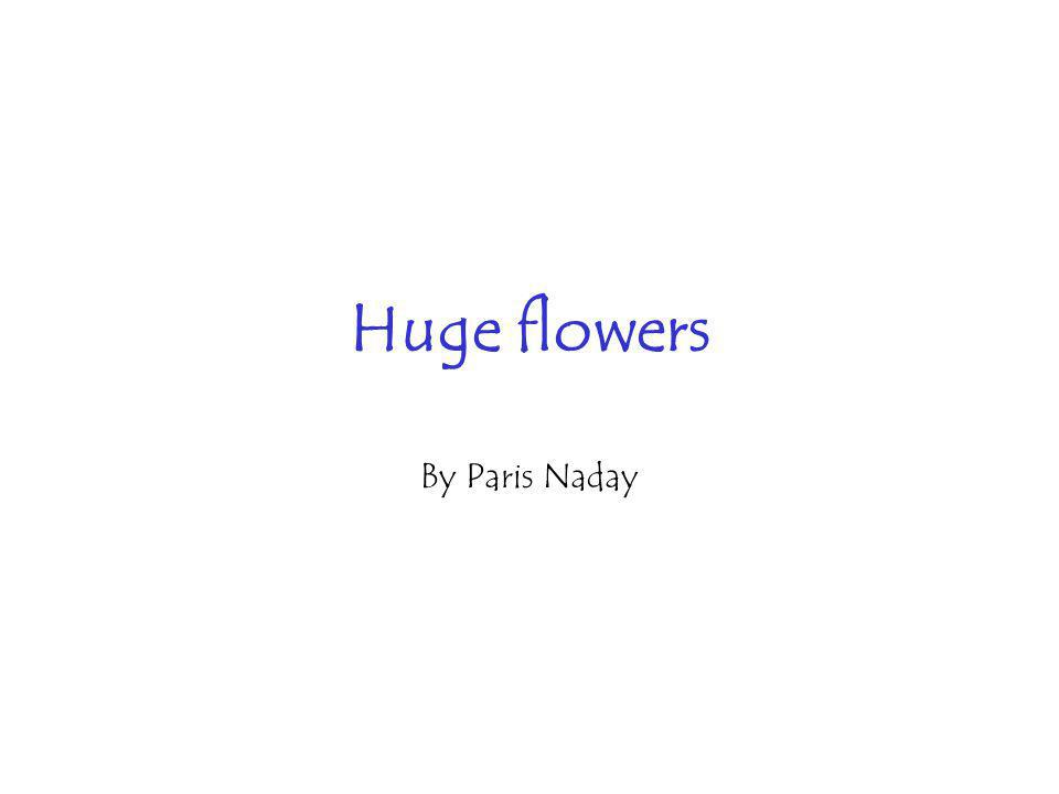 Huge flowers By Paris Naday