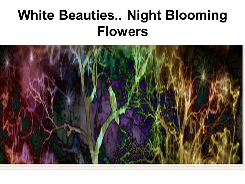 White Beauties.. Night Blooming Flowers