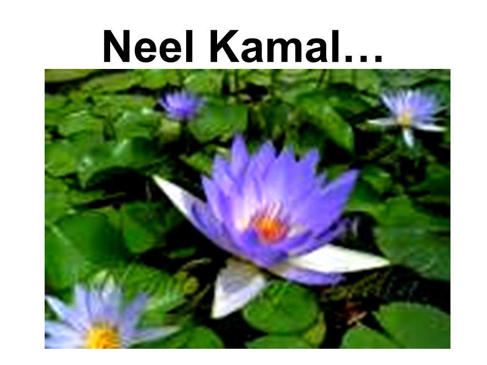 Neel Kamal…