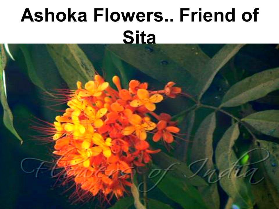 Ashoka Flowers.. Friend of Sita