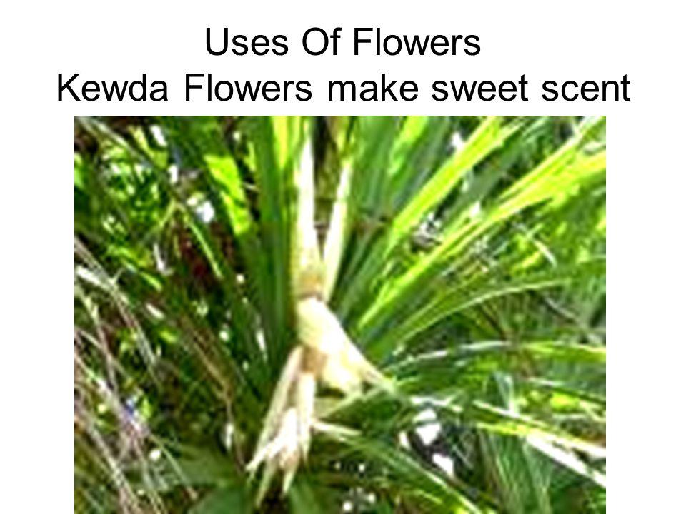Uses Of Flowers Kewda Flowers make sweet scent