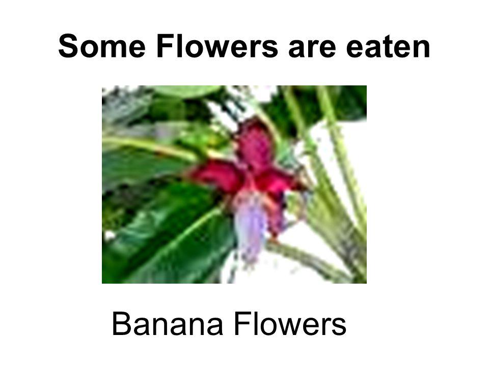 Some Flowers are eaten Banana Flowers