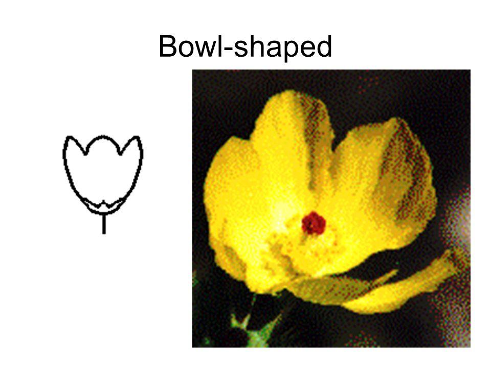 Bowl-shaped