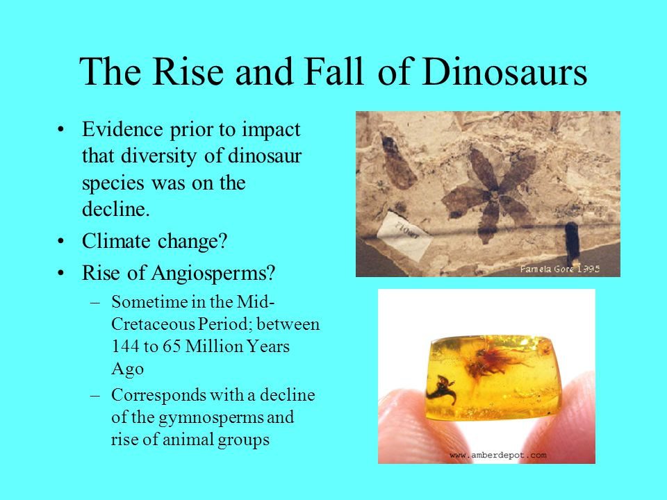 The Rise and Fall of Dinosaurs Evidence prior to impact that diversity of dinosaur species was on the decline. Climate change? Rise of Angiosperms? –S