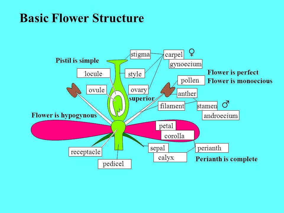 Ovary Superior Flower Hypogynous Flower Perigynous Flower Epigynous Ovary Inferior Ovary Half-Superior Ovary Half-Inferior