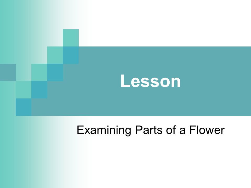Student Learning Objectives 1.Describe the parts of a flower.