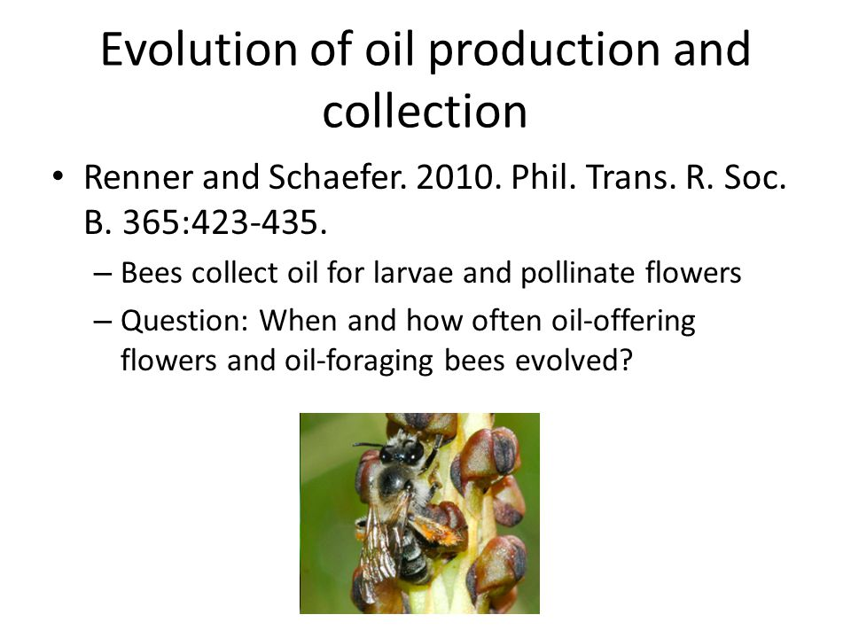Evolution of oil production and collection Renner and Schaefer. 2010. Phil. Trans. R. Soc. B. 365:423-435. – Bees collect oil for larvae and pollinate