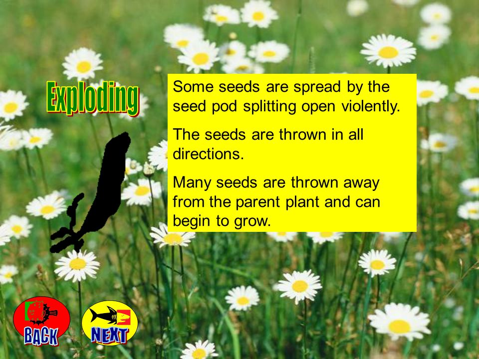 When a seed has been dispersed, only a few of those the plant creates land where they can form a new plant.