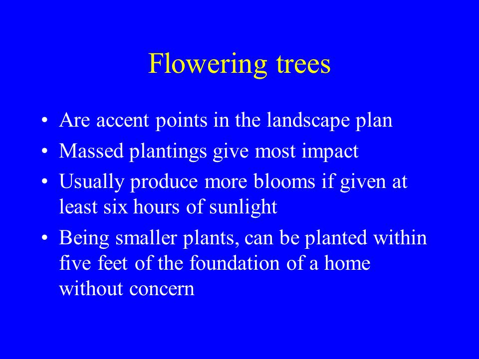 Flowering trees Are accent points in the landscape plan Massed plantings give most impact Usually produce more blooms if given at least six hours of sunlight Being smaller plants, can be planted within five feet of the foundation of a home without concern