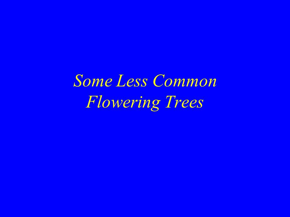 Some Less Common Flowering Trees