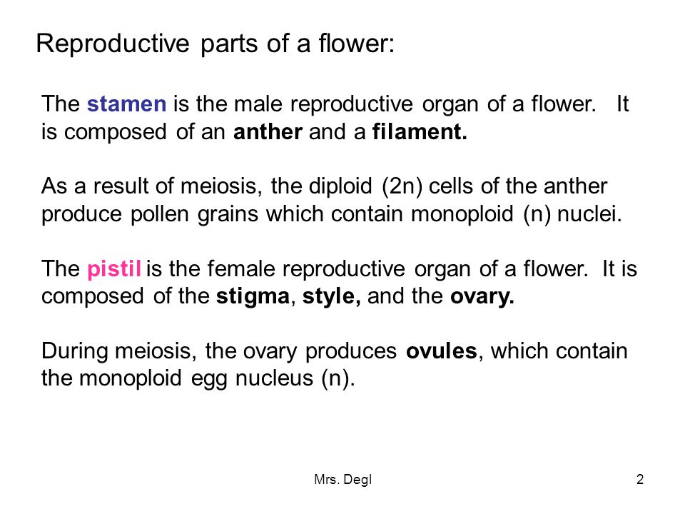 Mrs. Degl2 Reproductive parts of a flower: The stamen is the male reproductive organ of a flower. It is composed of an anther and a filament. As a res